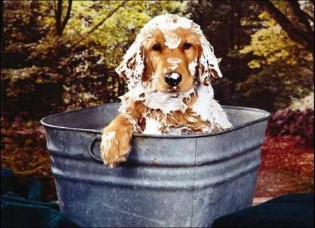 Dog in a Washtub.jpg